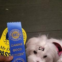 Zoey star puppy